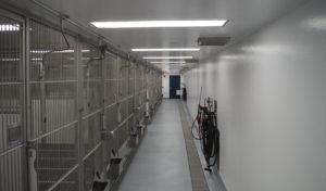 Hallway of kennels